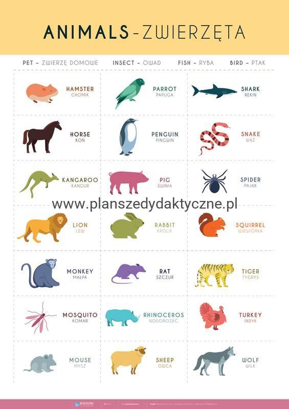 Angielski Słówka Zwierzęta Cz 2